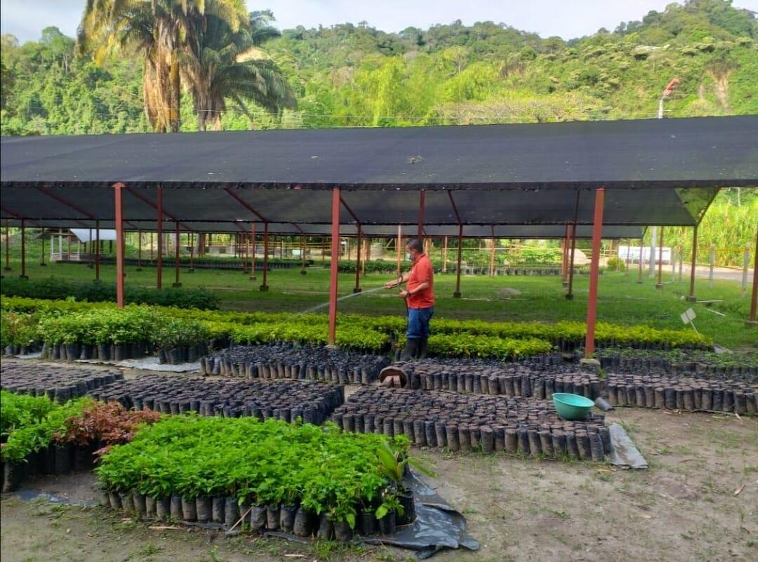 Después de 30 años Ibagué ya cuenta con su propio Vivero Forestal. 2